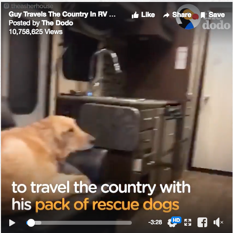 touring the country with rescue dogs